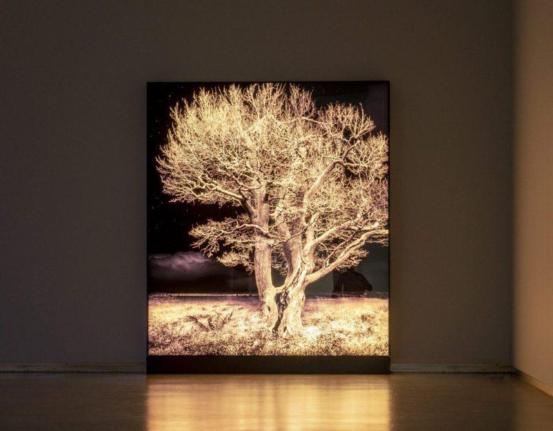 Geert Mul: Groot Rotterdams Atelier Weekend